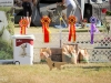 2013-08-04-lithuanian-retriever-club-show-w13img_4881