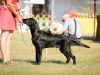 2013-08-04-lithuanian-retriever-club-show-w13img_4885
