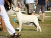 2013-08-04-lithuanian-retriever-club-show-w13img_4890