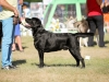 2013-08-04-lithuanian-retriever-club-show-w13img_4891