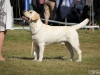 2013-08-04-lithuanian-retriever-club-show-w13img_4896