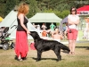 2013-08-04-lithuanian-retriever-club-show-w13img_4927