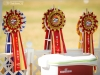 2013-08-04-lithuanian-retriever-club-show-w13img_4935