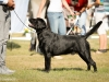 2013-08-04-lithuanian-retriever-club-show-w13img_4946