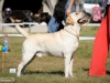 2013-08-04-lithuanian-retriever-club-show-w13img_4948