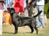 2013-08-04-lithuanian-retriever-club-show-w13img_4952
