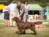 2013-08-04-lithuanian-retriever-club-show-w13img_4979
