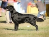 2013-08-04-lithuanian-retriever-club-show-w13img_4982