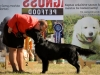 2013-08-04-lithuanian-retriever-club-show-w13img_4986