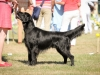 2013-08-04-lithuanian-retriever-club-show-w13img_4995
