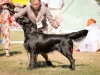 2013-08-04-lithuanian-retriever-club-show-w13img_5001