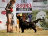 2013-08-04-lithuanian-retriever-club-show-w13img_5024