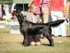 2013-08-04-lithuanian-retriever-club-show-w13img_5037