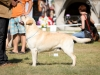 2013-08-04-lithuanian-retriever-club-show-w13img_5048