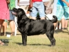 2013-08-04-lithuanian-retriever-club-show-w13img_5060
