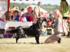 2013-08-04-lithuanian-retriever-club-show-w13img_5065