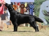 2013-08-04-lithuanian-retriever-club-show-w13img_5091