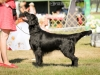 2013-08-04-lithuanian-retriever-club-show-w13img_5098