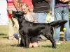 2013-08-04-lithuanian-retriever-club-show-w13img_5099