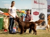 2013-08-04-lithuanian-retriever-club-show-w13img_5106