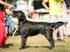2013-08-04-lithuanian-retriever-club-show-w13img_5120