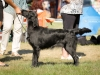 2013-08-04-lithuanian-retriever-club-show-w13img_5122
