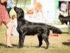 2013-08-04-lithuanian-retriever-club-show-w13img_5133