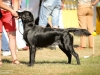 2013-08-04-lithuanian-retriever-club-show-w13img_5137
