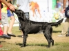 2013-08-04-lithuanian-retriever-club-show-w13img_5141