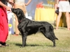 2013-08-04-lithuanian-retriever-club-show-w13img_5143