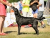 2013-08-04-lithuanian-retriever-club-show-w13img_5145
