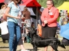 2013-08-04-lithuanian-retriever-club-show-w13img_5147
