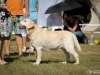 2013-08-04-lithuanian-retriever-club-show-w13img_5178
