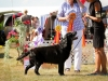 2013-08-04-lithuanian-retriever-club-show-w13img_5179