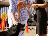 2013-08-04-lithuanian-retriever-club-show-w13img_5184