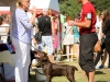 2013-08-04-lithuanian-retriever-club-show-w13img_5194