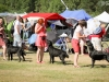 2013-08-04-lithuanian-retriever-club-show-w13img_5200