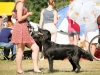 2013-08-04-lithuanian-retriever-club-show-w13img_5203