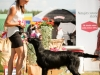2013-08-04-lithuanian-retriever-club-show-w13img_5214