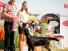 2013-08-04-lithuanian-retriever-club-show-w13img_5220