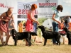 2013-08-04-lithuanian-retriever-club-show-w13img_5227