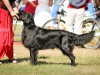 2013-08-04-lithuanian-retriever-club-show-w13img_5239