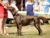 2013-08-04-lithuanian-retriever-club-show-w13img_5246