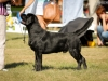 2013-08-04-lithuanian-retriever-club-show-w13img_5251