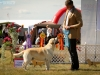 2013-08-04-lithuanian-retriever-club-show-w13img_5263