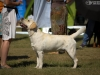 2013-08-04-lithuanian-retriever-club-show-w13img_5270