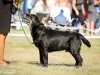 2013-08-04-lithuanian-retriever-club-show-w13img_5273
