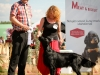2013-08-04-lithuanian-retriever-club-show-w13img_5281