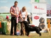 2013-08-04-lithuanian-retriever-club-show-w13img_5297