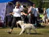 2013-08-04-lithuanian-retriever-club-show-w13img_5308